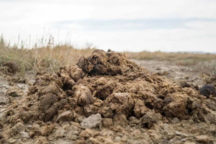 CDT Wyoming Great Basin Poop Pile