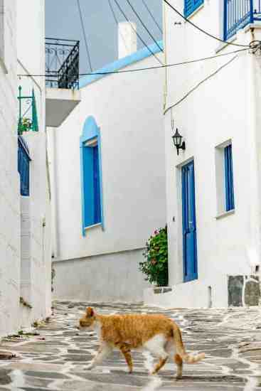 Greece Cat Walking