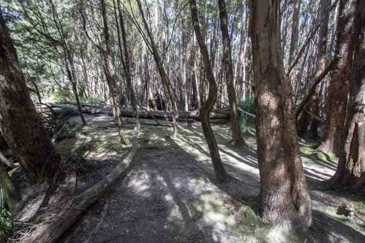 Tasmania Federation Peak Track Forest Camp