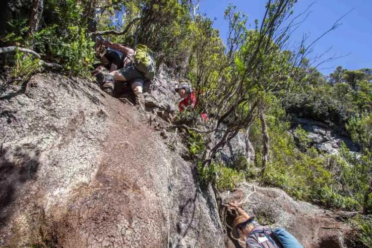 Tasmania Federation Peak Track Moss Ridge Climb