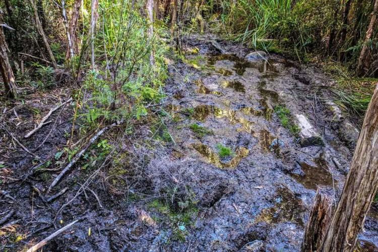 Tasmania Federation Peak Track Mud