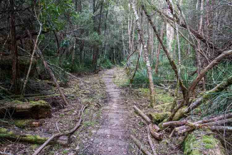 Frenchmans Cap Track Trail