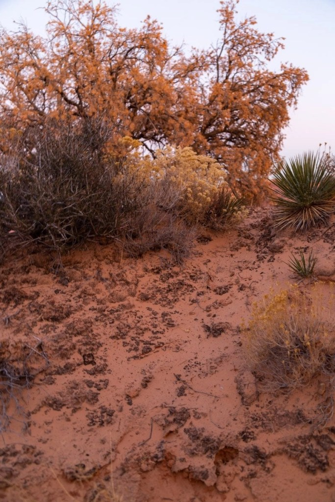 crpytobiotic soil in the utah desert