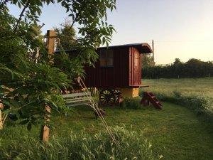 The Shepherd's Hut In the evening sun