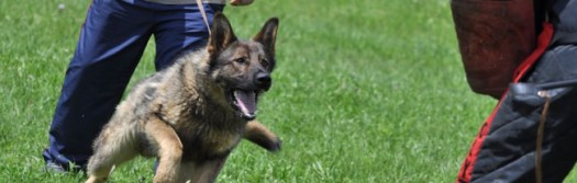 Image result for Security Patrol Dogs