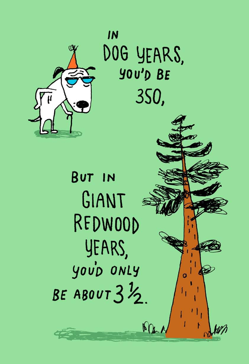 50 Is 350 In Dog Years Funny Birthday Card Greeting