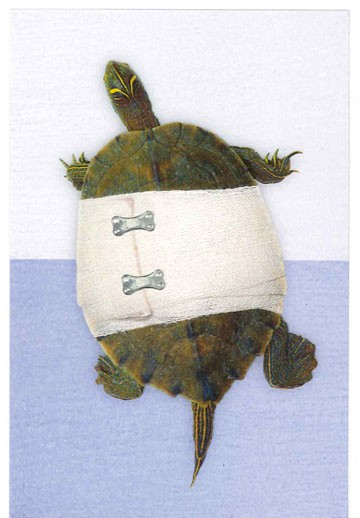 Bandaged Turtle Get Well Card Greeting Cards Hallmark