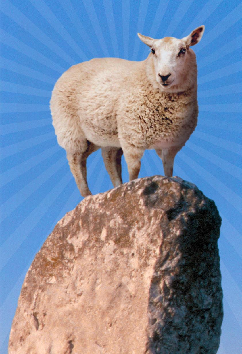You Rock! Sheep On Boulder Thank You Card Greeting Cards