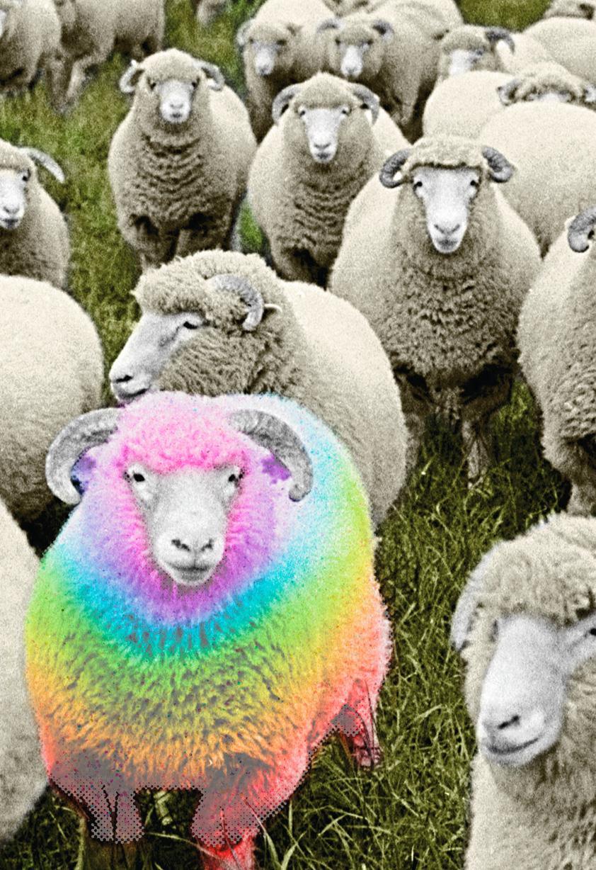 Rainbow Ram Birthday Card Greeting Cards Hallmark