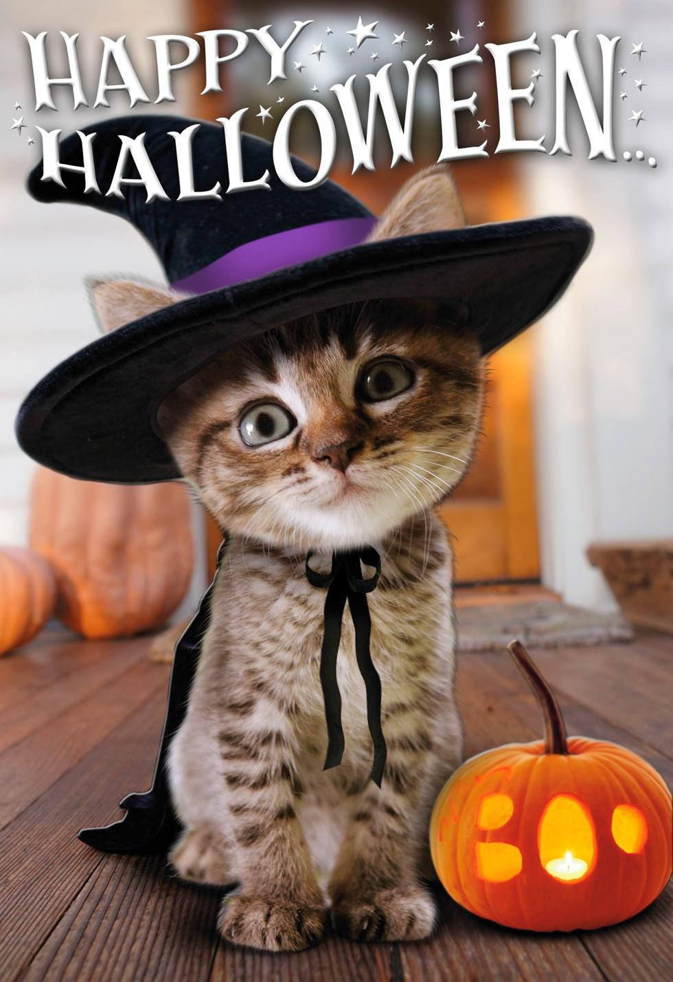 Cute Halloween Kitten Witch Halloween Card  Greeting