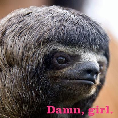 Damn Girl Sloth Funny Just Because Card  Greeting Cards  Hallmark
