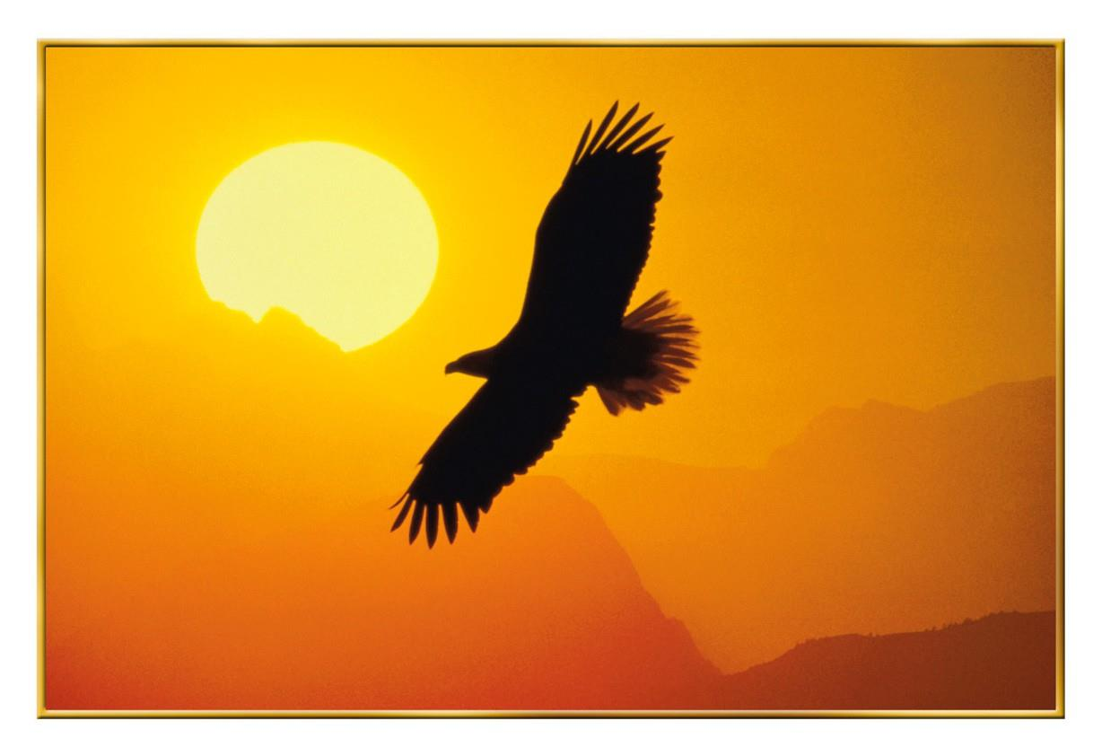 Soaring Eagle Blank Veterans Day Card Greeting Cards