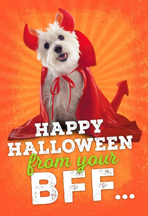Furry Friend Halloween Card - Greeting Cards Hallmark