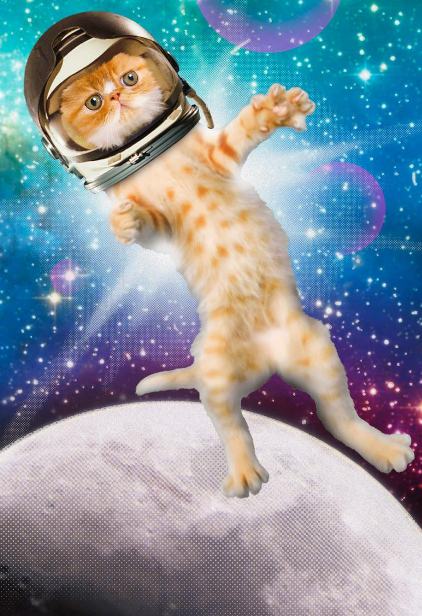Cat in Space Funny Birthday Card  Greeting Cards  Hallmark