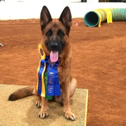 Another of many titles from the agility ring