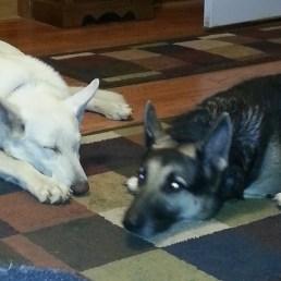 Jetta and Bandit
