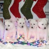 Cutie Pies!