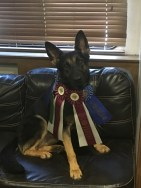 2 titles in one weekend of agility
