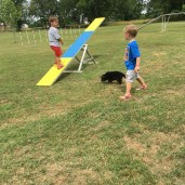 Teaching the puppies to seesaw!