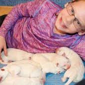 Piper and her Grandbabies-this child has literally lived in the whelping box with her BBF, Maci.