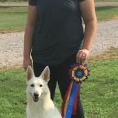AKC Virtual Rally Novice TItle-Scarlett and I scored very high 90s all three runs