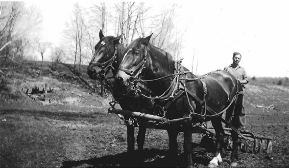 Man standing behind a pair of horses with a plough