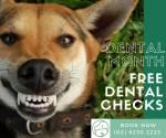 Dental Month