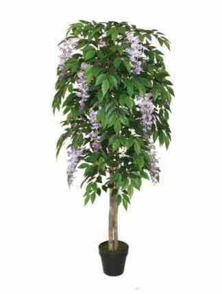 160Cm Wood Trunk Wisteria With Pot