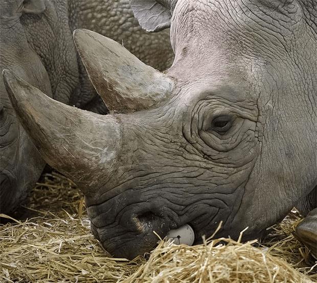 آج آپ کی نظر کا امتحان ہے، ان جانوروں کی تصاویر میں چھپی ہوئی چیزیں تلاش کر کے دکھائیں 9