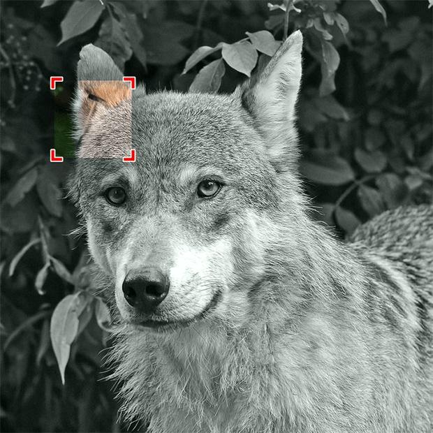 آج آپ کی نظر کا امتحان ہے، ان جانوروں کی تصاویر میں چھپی ہوئی چیزیں تلاش کر کے دکھائیں -- جوابات 5