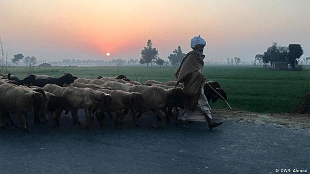 پاکستان میں دیہات کی سادہ مگر پرلطف زندگی جس کی خواہش ہر کسی کو٬ چند دلچسپ جھلکیاں 20