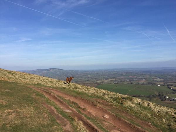 Another Wild Pony on a Wild Summit