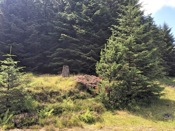 Hidden Trig on Cefn yr Ystrad