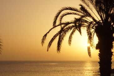Foto Palmen im Sonnenuntergang