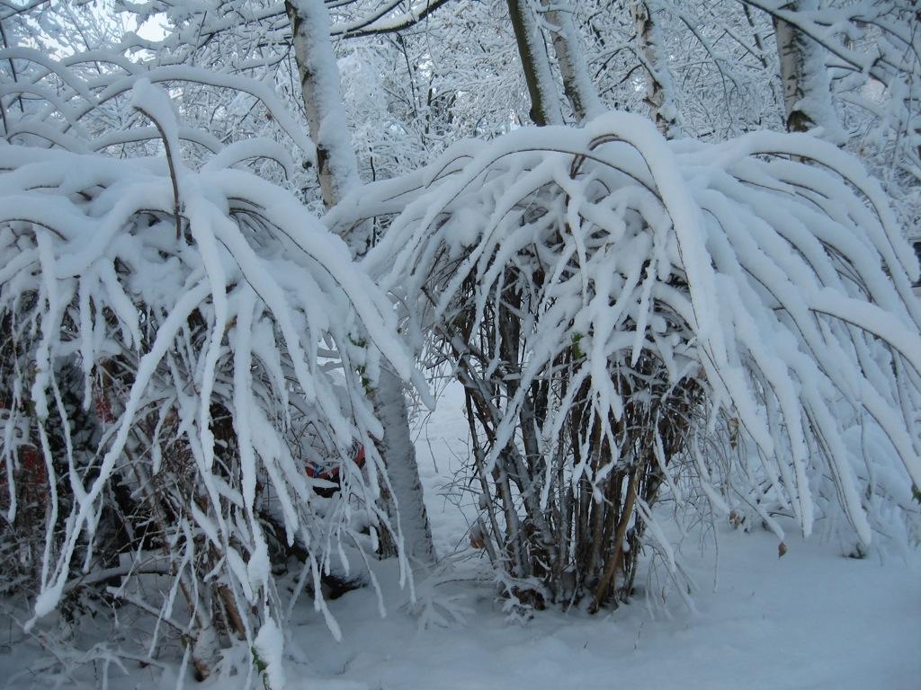Schneelandschaft  Blogging