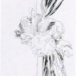 Flowers B&W, (II.100), 1974