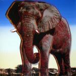 African Elephant, [IIB.293], 1983