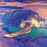 Turtle (II.360A), 1985