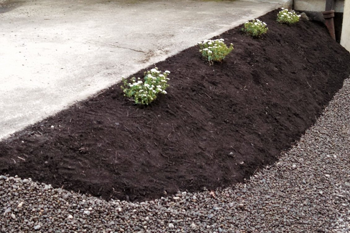 Slope landscaping with candytuft