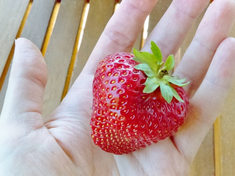 Fresh strawberry from the garden