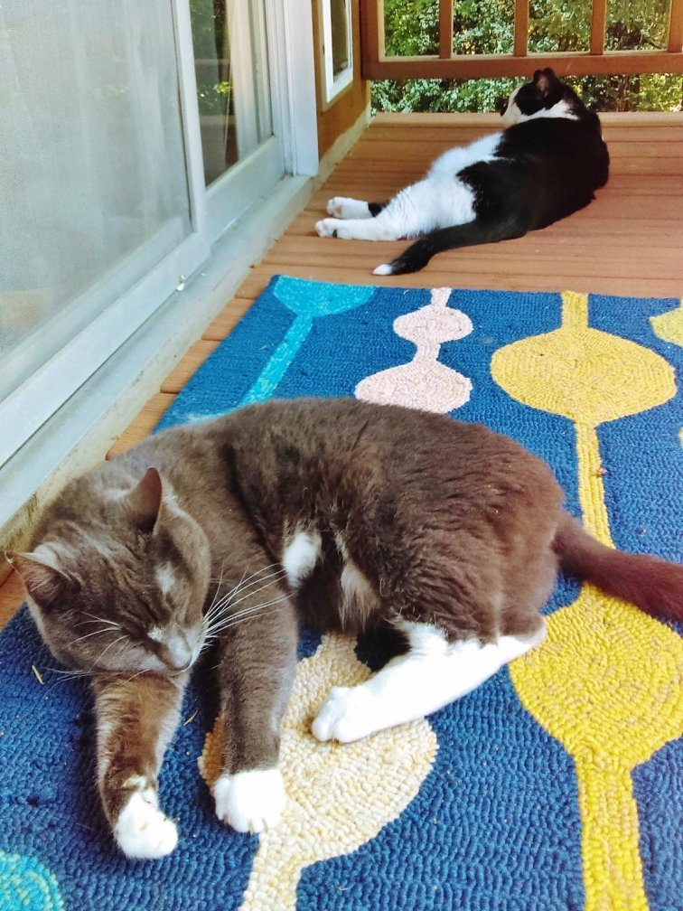 Cozy outdoor rug for a shared catio space