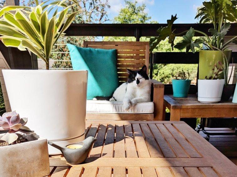 Cat enjoying a modern deck in the backyard