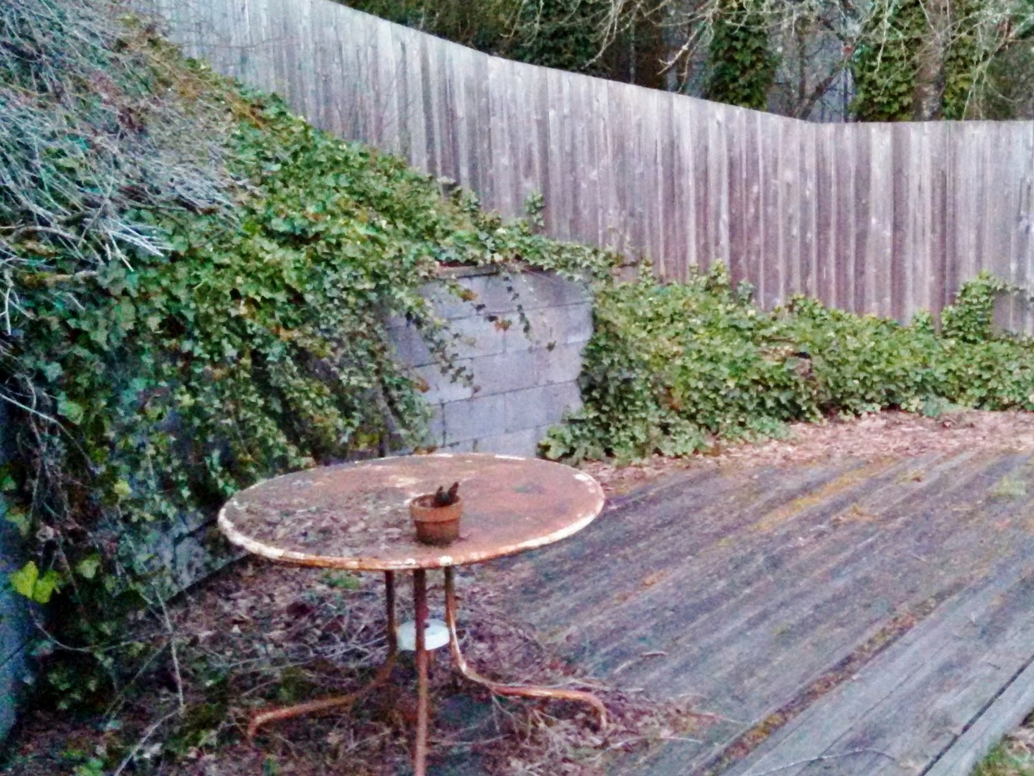 How to Get Rid of Ivy for Good: Ivy spilling onto deck