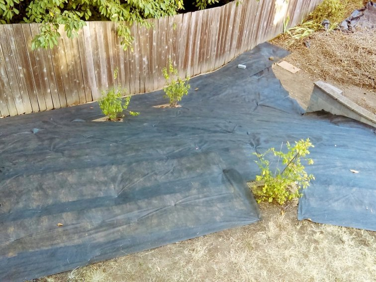 How to Get Rid of Ivy for Good: Cover your reclaimed yard with weed barrier