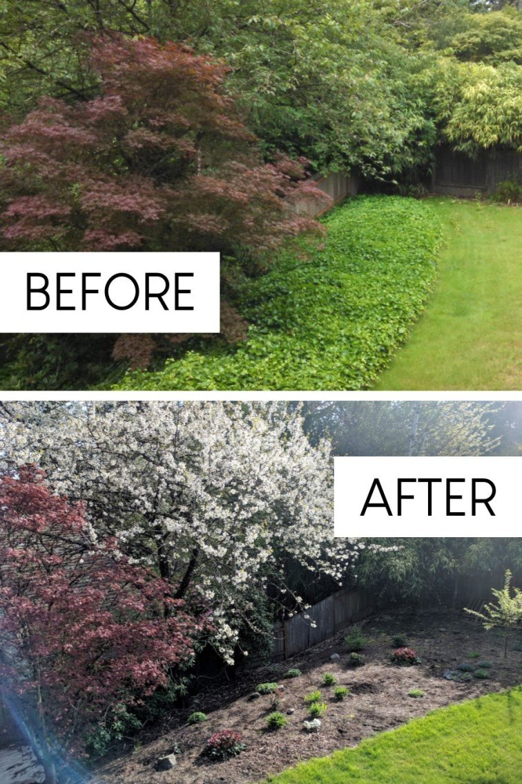 Huge ivy removal project in fixer upper backyard before and after