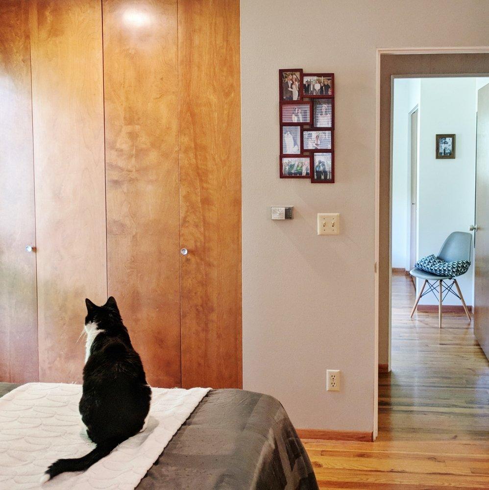 Cat in midcentury bedroom