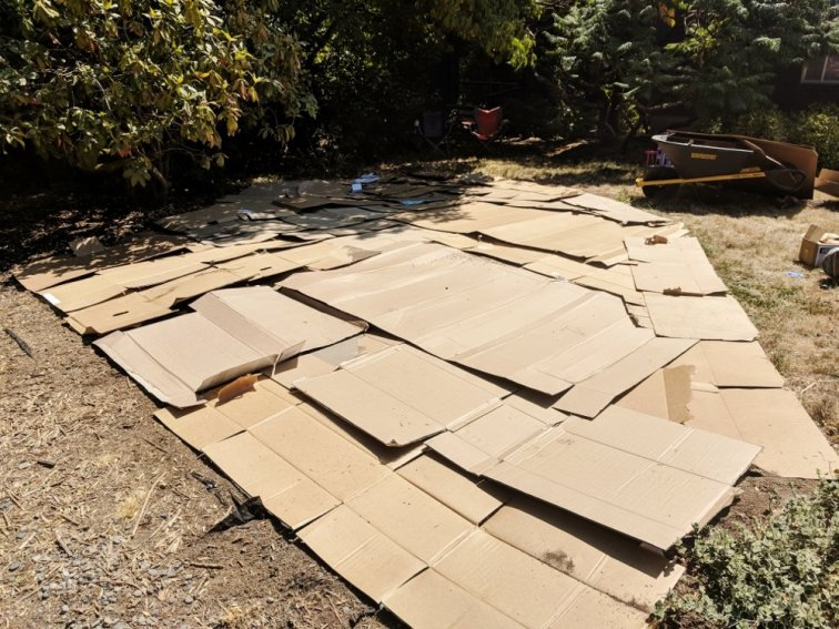 Laying cardboard to prevent weeds