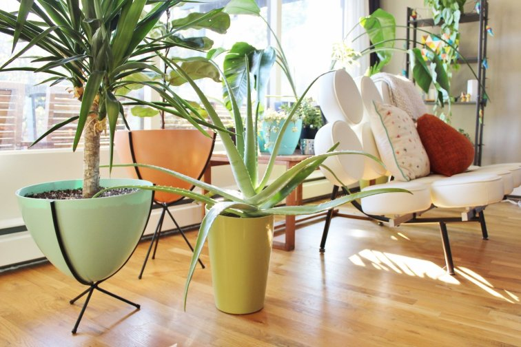 Colorful mid-century modern planters and marshmallow couch