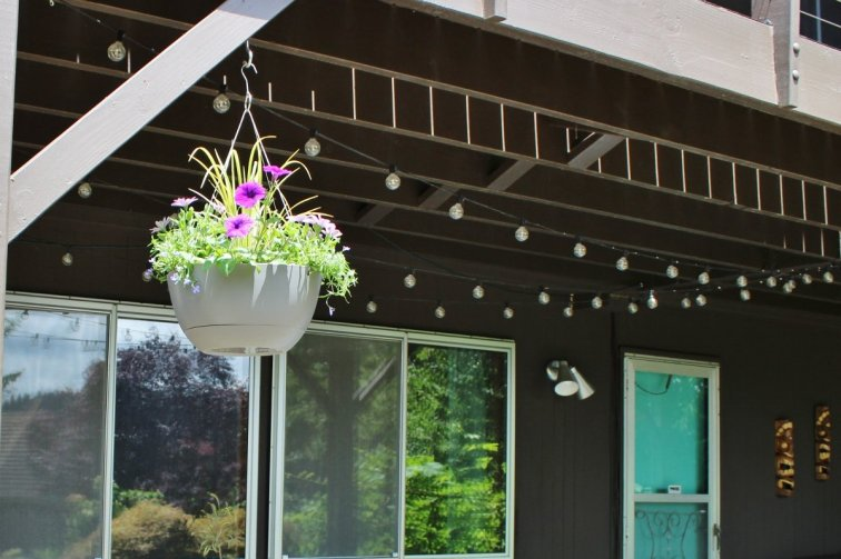 Modern hanging basket with lobelia spilling over the side