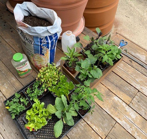 New plant starts for the vegetable container garden